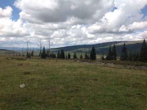 High Mountain Ranch Wildlife Views : Tierra Amarilla : Rio Arriba County : New Mexico