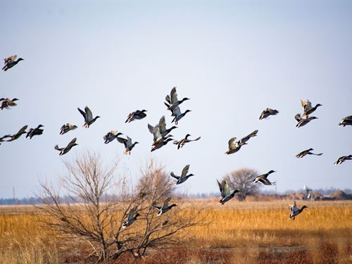 Central Kansas Waterfowl Basin : Ellinwood : Barton County : Kansas
