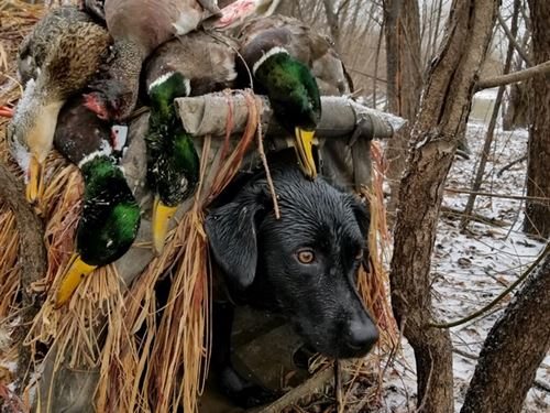 Battle Axe Hunting Club : Marianna : Lee County : Arkansas