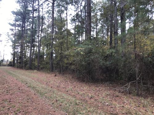 Mims Road Tract : Sumter : South Carolina