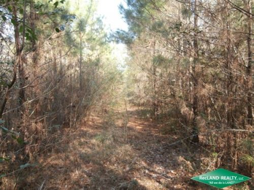 71.9 Ac, Timberland For Recreation : Broaddus : San Augustine County : Texas