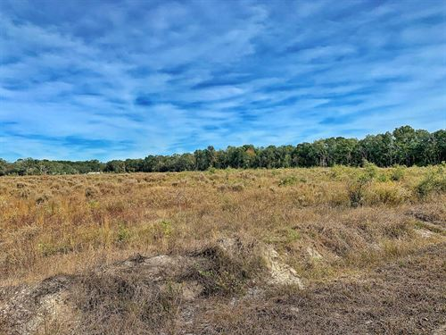 Land Trenton Chiefland Florida Levy : Trenton : Levy County : Florida