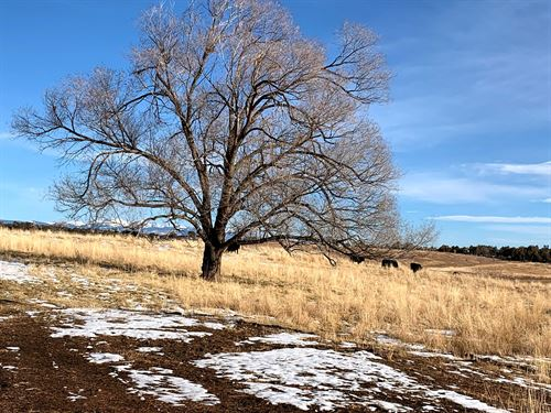 69 Acres Irrigated Farmland : Lewis : Montezuma County : Colorado
