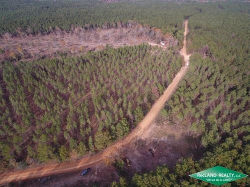40 Ac, Timberland For Home Site : Vixen : Caldwell Parish : Louisiana