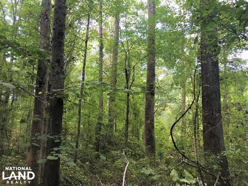 Private Wooded Home Site : Pickens : South Carolina