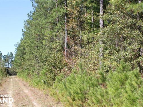 Black Creek Farms 7 Ac Home Site : Summerville : Berkeley County : South Carolina