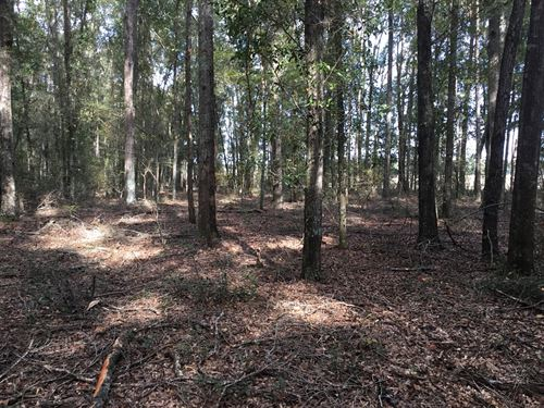 10.08 Acres Suwannee County : Live Oak : Suwannee County : Florida