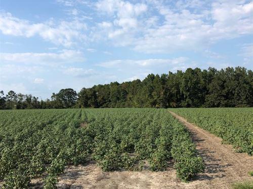 Harville Road Tract 1 : Statesboro : Bulloch County : Georgia