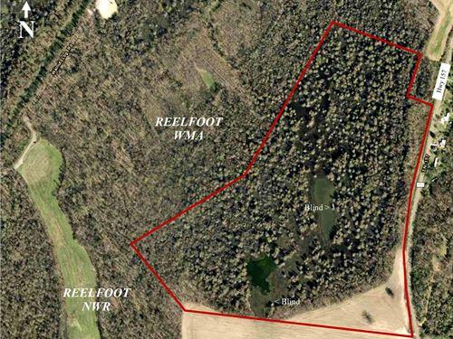Reelfoot Lake, Duck, Deer, Turkey : Walnut Log : Obion County : Tennessee