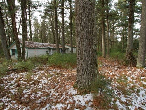 Affordable Wooded Land Building : Adams : Wisconsin