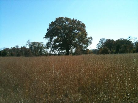 Timber Springs Tract 4.5 : Antlers : Pushmataha County : Oklahoma