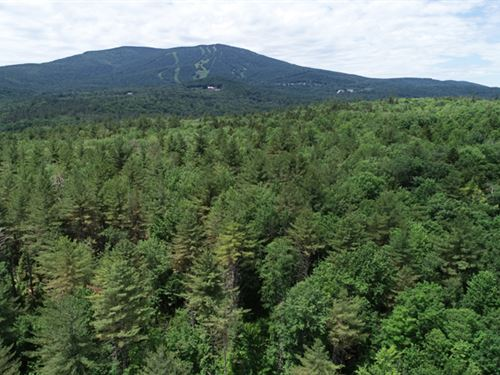 Pikes Falls Forest : Jamaica : Windham County : Vermont
