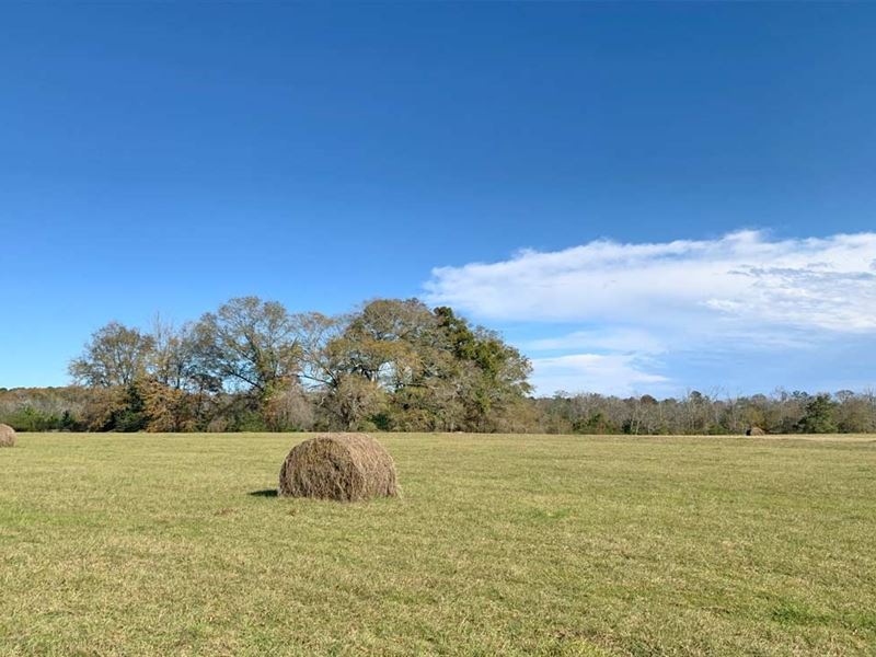 Woods Spur Tract : Brantley : Crenshaw County : Alabama