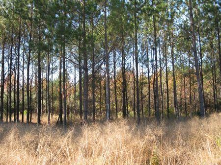 Pocotaligo Tract 113 : Varnville : Hampton County : South Carolina