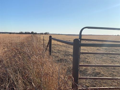 Land Grass, Cultivated Equine : Braman : Kay County : Oklahoma