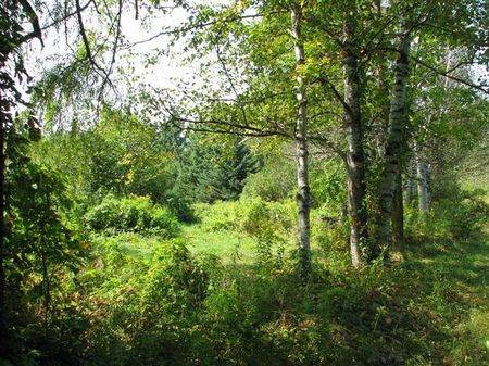 Downeast Trescott Acreage : Trescott : Washington County : Maine