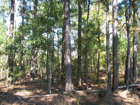 Land for sale in Monroe County Alabama | Lands of America