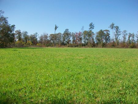 Small Hunting Tract Or Country Farm : Cochran : Bleckley County : Georgia