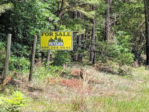 The Homestead Tract : Ozark : Dale County : Alabama