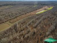 246 Ac, Premium Hunting Tract : Saint Joseph : Tensas Parish : Louisiana