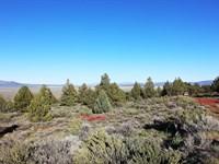 Amazing Views, Tall Trees, $548/Mo : Termo : Lassen County : California