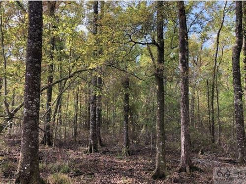 Pineland Hunting / Homesite : Pineland : Jasper County : South Carolina