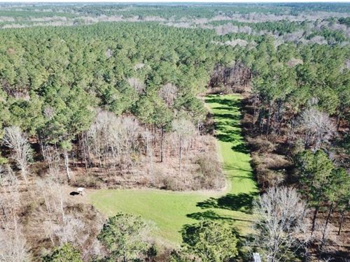 Recreational Timber Land For Sale : Union Church : Jefferson County : Mississippi