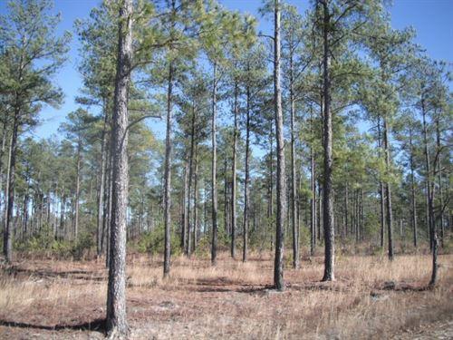 321.3 Acres, Kershaw County, SC : Bethune : Kershaw County : South Carolina