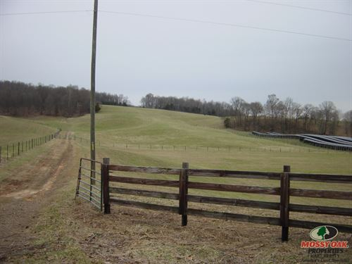 Working Cattle Farm : Horse Cave : Metcalfe County : Kentucky