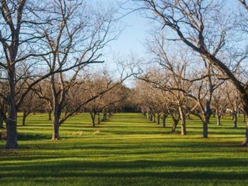 Pecan Grove : Hiltonia : Screven County : Georgia