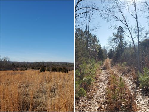 Vacant Land For Sale in Southern MO : Norwood : Douglas County : Missouri