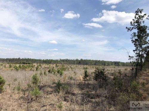 Pineland Woodsville Rd 20 ac : Pineland : Jasper County : South Carolina