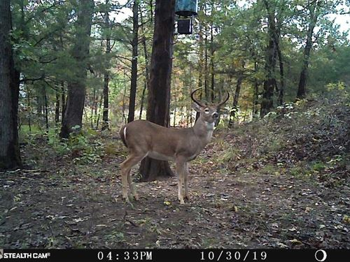 Recreational Hunting 1/2 Mile From : Hugo : Choctaw County : Oklahoma