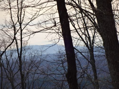 7.51 Acres In A Private Wooded : Landrum : Greenville County : South Carolina
