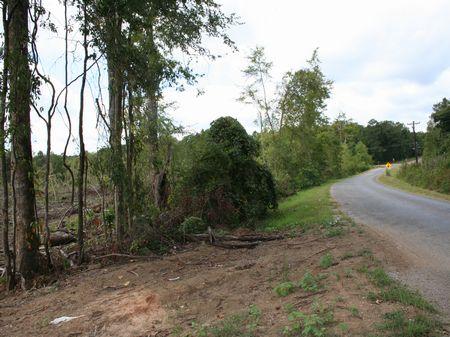 85 Acres Development Potential : Forest : Scott County : Mississippi