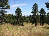 Bear Lodge Retreat