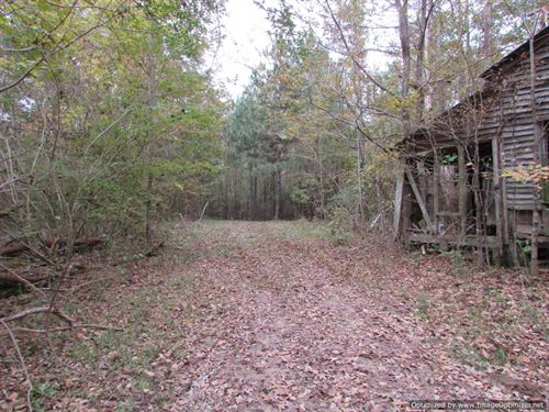 Hunting Land Bordered by Forest : Louisville : Winston County : Mississippi