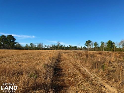 Spring Branch Hunting & Timber Inve : Bamberg : South Carolina
