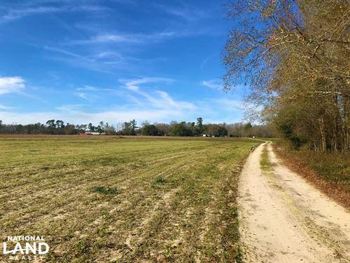 Walnut Grove Farmland : Bowman : Orangeburg County : South Carolina