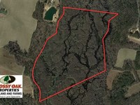 88 Acres of Hunting Land For Sale : Fairmont : Robeson County : North Carolina