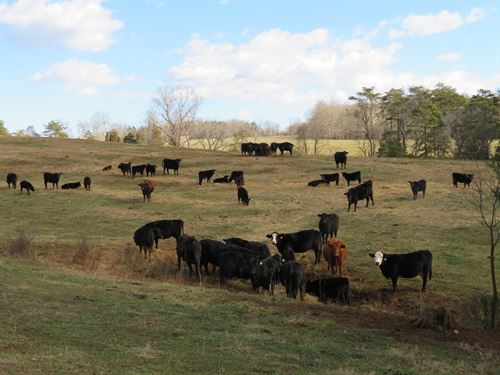106 Acres Pittsylvania County, VA : Pittsville : Pittsylvania County : Virginia