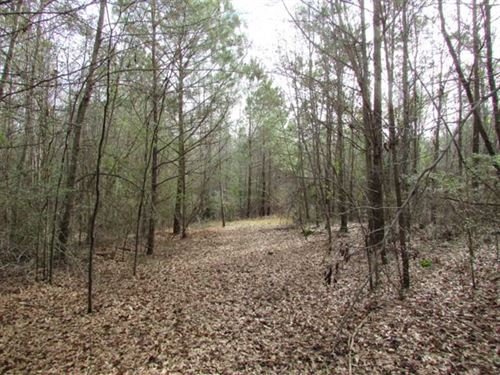 25 Acre Hunting Tract or Homesite : Richland : Webster County : Georgia