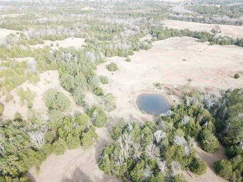 389 Acre, Wilcox County, Pineapple : Pineapple : Wilcox County : Alabama