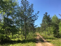 1179 Acres, Will Divide : Springville : Saint Clair County : Alabama