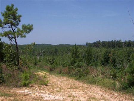 1200 Acres - Will Divide : Springville : Saint Clair County : Alabama