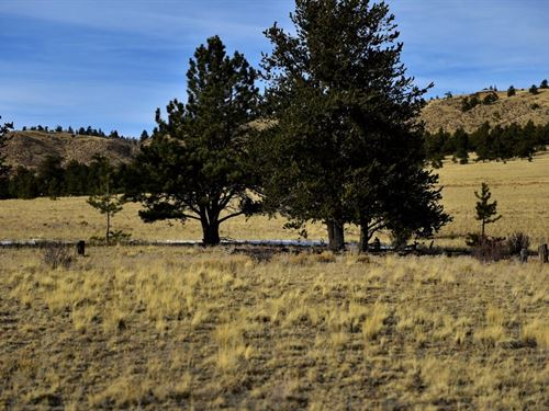 Beautiful Land With Trees & Access : Hartsel : Park County : Colorado