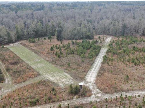 122 Acres Paperbush Way : Madison : Florida