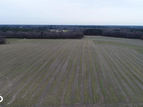 Micro Road Mini-Farm : Selma : Johnston County : North Carolina