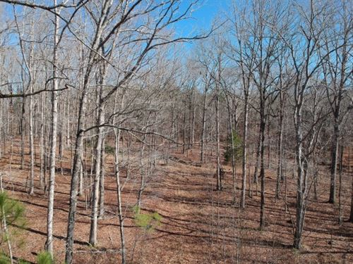 30 Acres, Fairfield County, SC : Ridgeway : Florence County : South Carolina