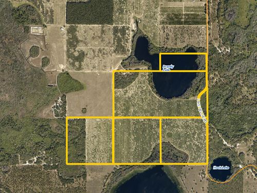 Twin Lakes Grove : Clermont : Lake County : Florida